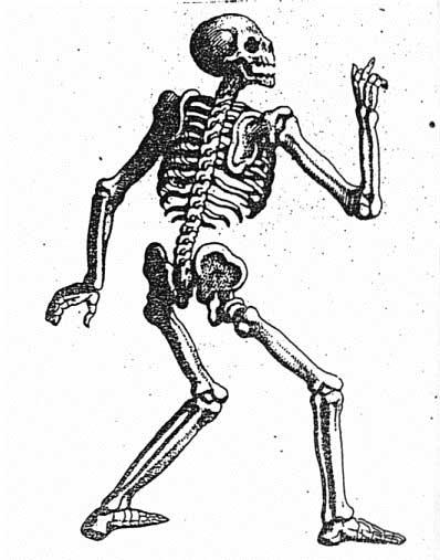 Knochen Im Menschen